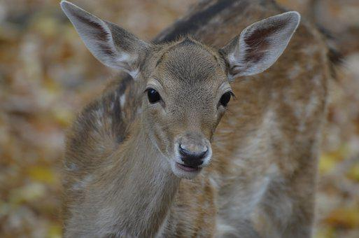Damm Wild, Roe Deer, Wild, Nature, Animal, Animal World