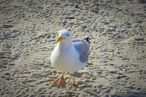 Common Tern, Beach, Sand, Nature