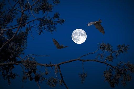 Full Moon, Night, Bats, Darkness, Halloween