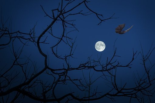 Full Moon, Night, Bat, Dark, Halloween, Darkness