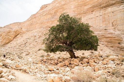 Israel, Desert, Tree