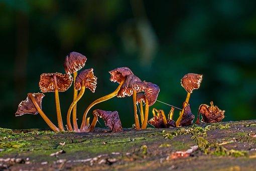 Mushroom, Mushrooms, Sponge, Moss, Mini Mushroom