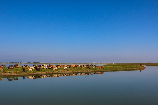Blue Sky, Lake, Blue, Landscape, Nature, Cattle