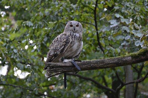 Eagle Owl, Feather, Bird, Owl, Plumage, Nature, Bill