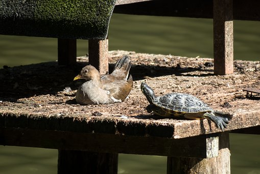 Bird, Water Turtle, Turtle, Concerns, Rest, Silent