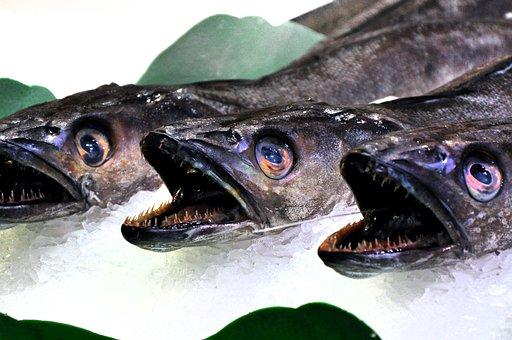 Fish, Market, Food, Fresh, Sea, Fish Market, Fang