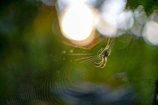 Spider, Web, Cobweb, Nature, Close Up, Animal World