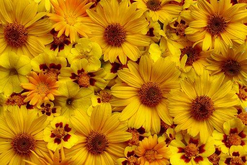Flowers, Yellow Garden, Summer, Thank You