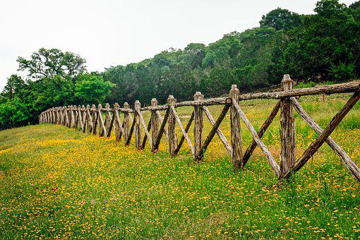 Hill Country Texas, Fence Row, Texas Wildflowers