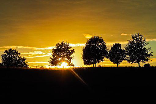 Sunset, Trees, Landscape, Nature, Sky, Clouds, Forest