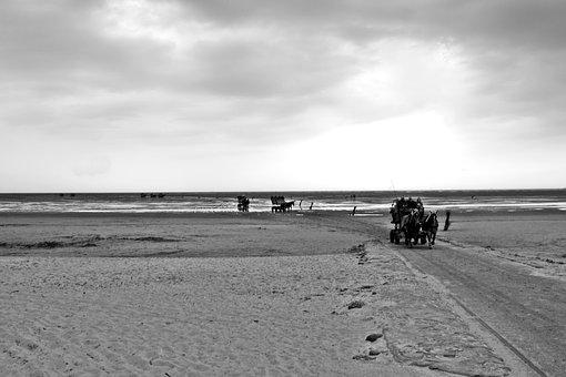 North Sea, Wadden Sea, Watt Car Travel, Coach, Cuxhaven