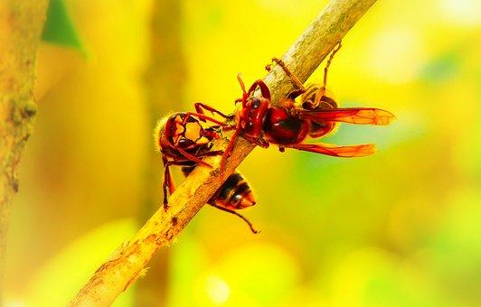 European Hornet, Insects, Work, Socket, Wood, Sprig