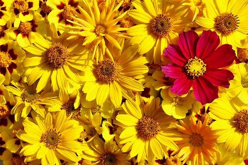 Flowers, Flora, Summer, Yellow, Pink, Greeting