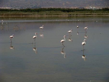 Flamingo, Wildlife, Bird, Iberian Southeast