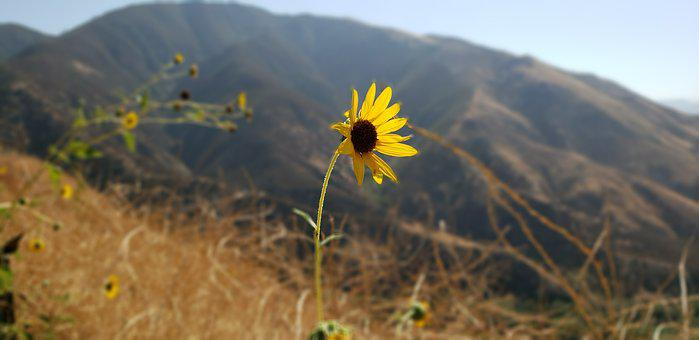 Lake Gregory, Nature, Outdoors, Flower, Flora, Sky