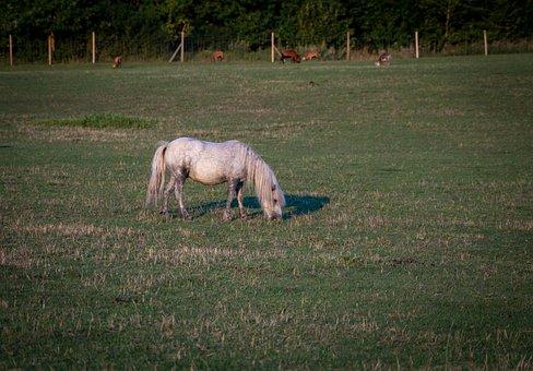 Donkey, Grey Donkey, Pasture, Meadow, Animal, Grey