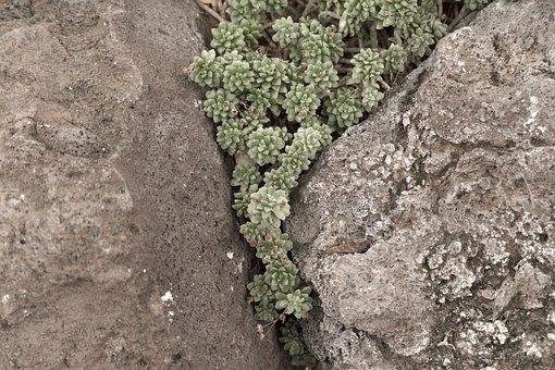 Succulents, Stone Garden, Plant, Nature, Green, Flora