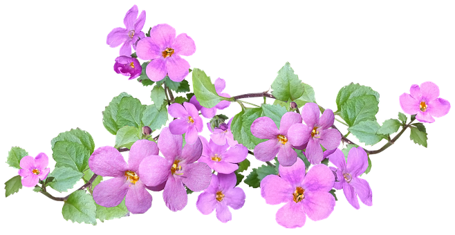 Flowers, Pink, Spring, Plant, Garden Nature
