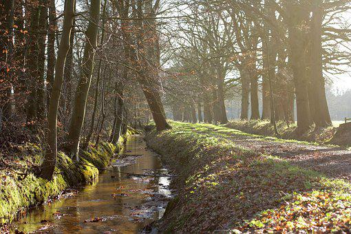 Staverden, Creek, Winter, Forest