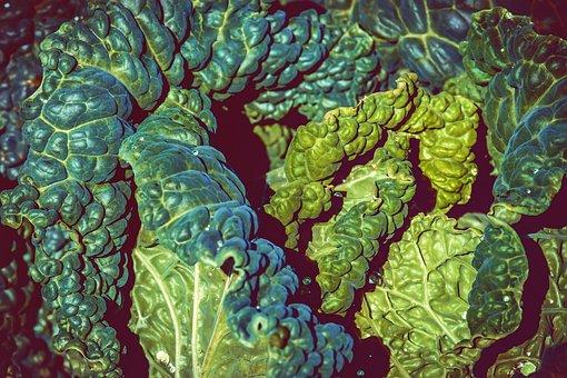Savoy, Kohl, Vegetables, Edible, Savoy Cabbage, Green