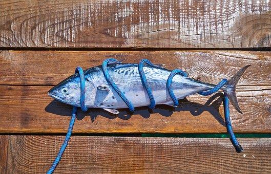 Fish, Fresh, Catch, Marine, Restaurant, Fisherman