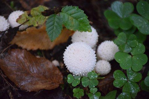 Forest, Floor, Nature, Moss, Autumn, Green, Mushroom