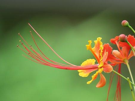 Nature, Flower, Leaf, Plant, Outdoor, Petal, Close-up