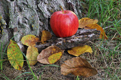 Autumn, Apple, Red, Fruit, Vitamin C, Food, Fresh