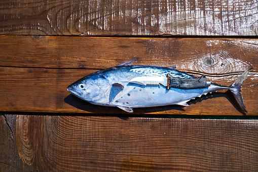 Fish, Knife, Hack, Sharp, Fresh, Catch, Marine