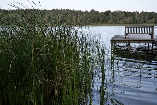 Nature, Landscape, Water, Sky, Idyllic, Scenic, Reed