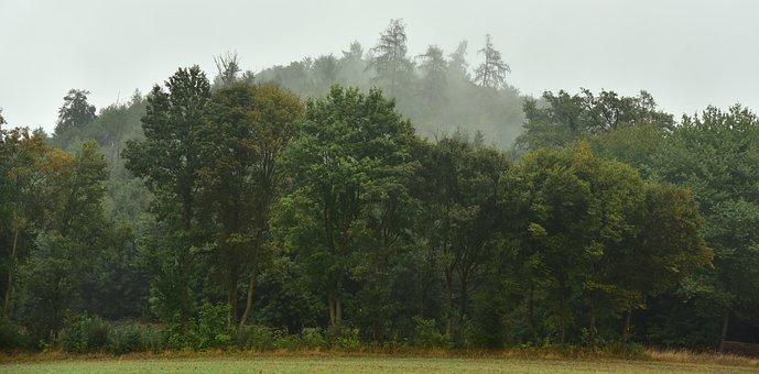 Forest, Haze, Fog, Landscape, Autumn, Trees, Green