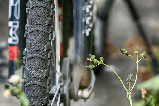 Wheel, Bike, Bicycle, Wild Flowers