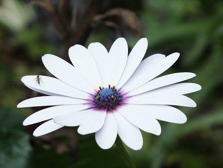 Garden, Nature, Flowers, Plant, Flora, Bud, Summer