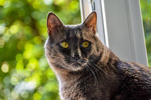Cat, Looking, Yelow Eyes