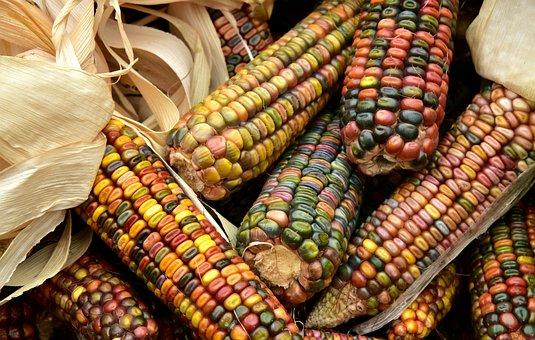 Corn, Ornamental Corn, Cereals, Corn On The Cob