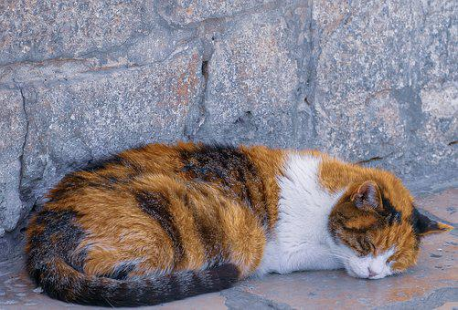 Cat, Animal, Pet, Predator, Dangerous, Portrait, Feline