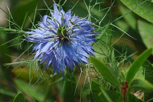 Nature, Flower, Flora, Summer, Leaf, Grass, Field