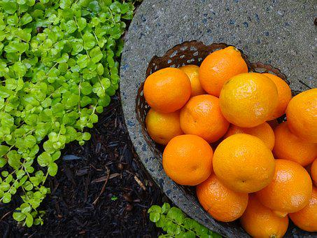 Orange, Sweet, Fresh, Food, Fruit, Healthy, Nutrition