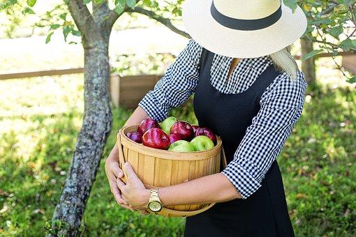 Apples, Basket Of Apples, Woman, Harvest, Basket, Fruit