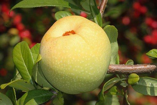 Apple, Embellishment, Small, Fruit, Ornamental Fruit
