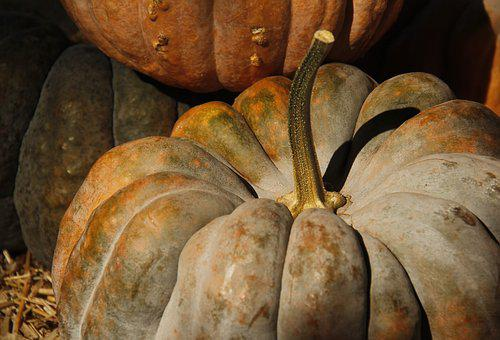 Pumpkin, Fall, Autumn, Harvest, Orange, Gourd, Season