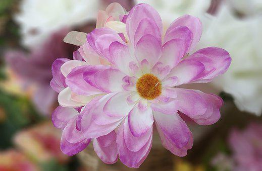 Lotus, Harmony, Artificial Flower, Flowers, Pink