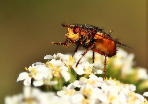 Fly, Macro, Insect, Close Up, Flight Insect