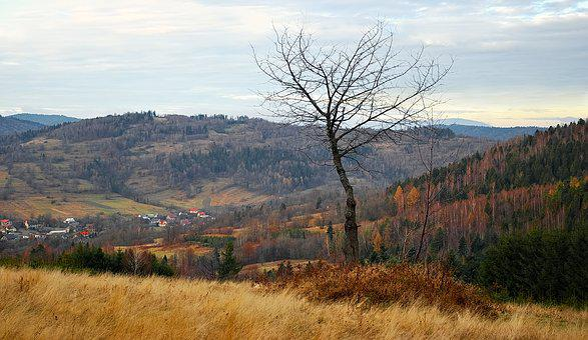 Tree, Grass, Polyana, Meadow, Landscape, Mountains