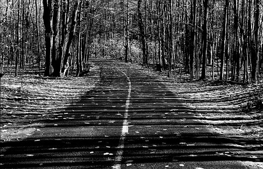 Road, Trees, Nature, Woods, Landscape, Path, Fall