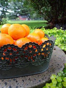 Orange, Citrus, Fresh, Green, Garden, Can, Outdoors