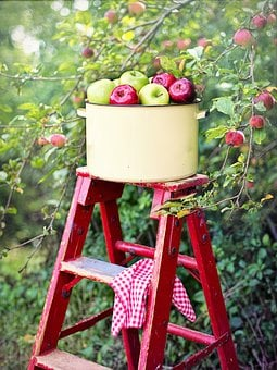 Apples, Apple Orchard, Apple Picking, Picking Apples