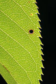The Leaves, Green, Wood, Nature, Plants, Leaf