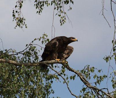 Bird, Predator, Nature, Bill, Animal, Raptor, Feather