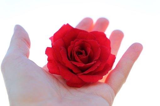 Stop Youth Suicide, Red Rose In Hand, With Love